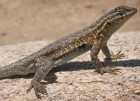 14 Shocking Health Benefits of Eating Lizard