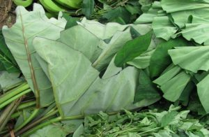 taro leaves benefits