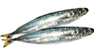 galunggong fish