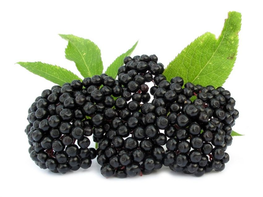 21 Health Benefits of Elderberry (No.16 No Doctor Uses)