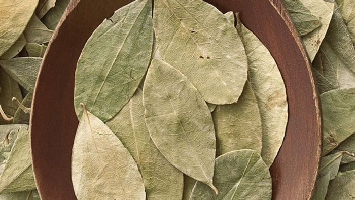 health benefits of coca leaf