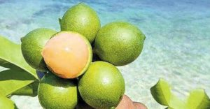 health benefits of spanish lime