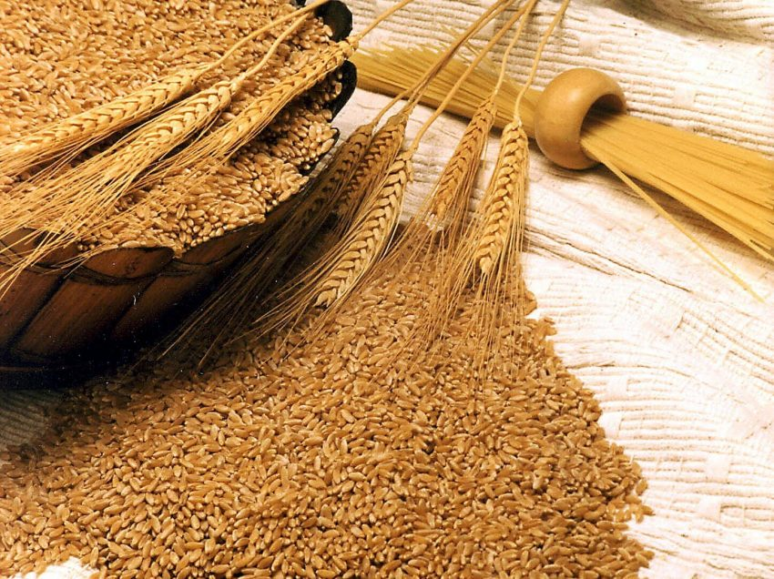 27 Health Benefits of Wheat Germ – Beauty – Diet –  Body Performance