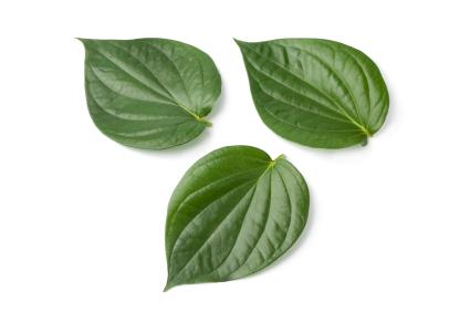 health benefits betel leaves