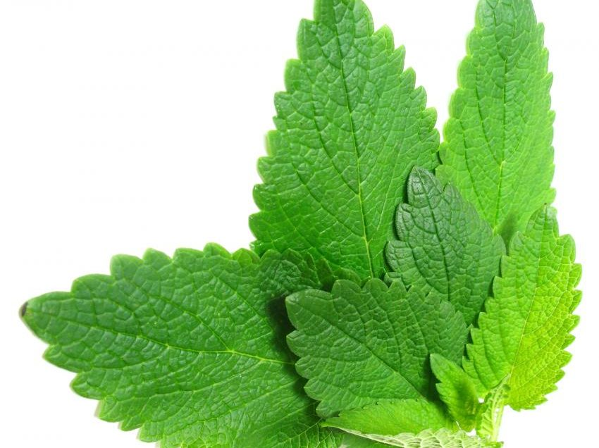 17 Scientific Health Benefits of Spearmint Leaves (No.12 is On Point!)
