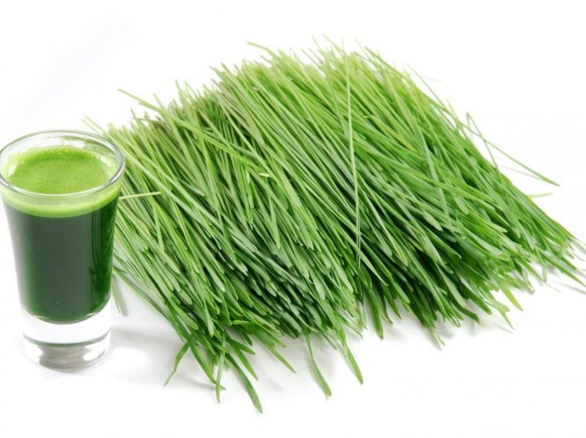 14 Scientific Health Benefit of Wheatgrass Tea – Beauty Treatments – Reproductive Systems