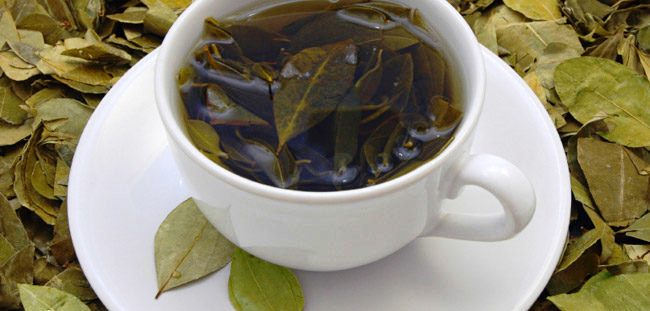 23 Top Health Benefits of Avocado Leaves Tea #Amazing Facts