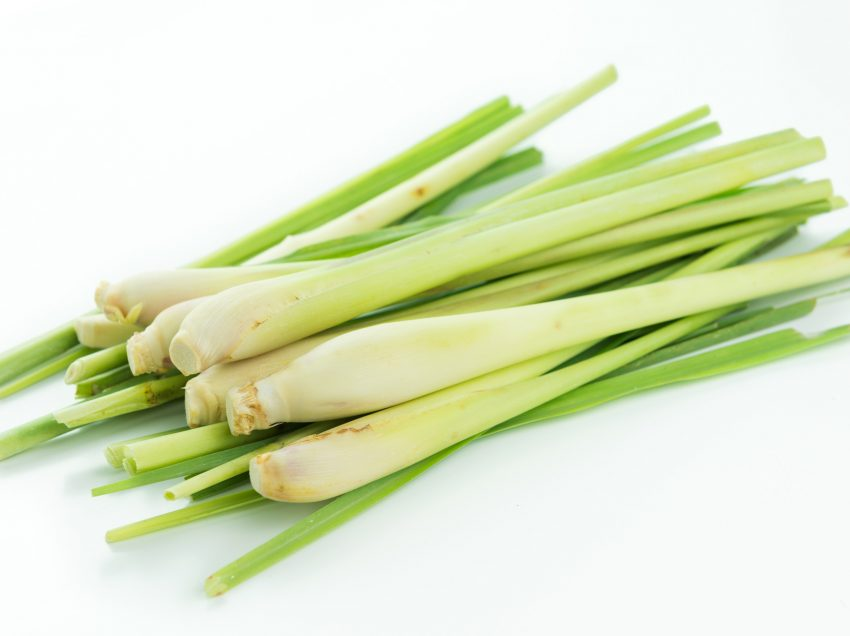 26 Top Health Benefits of Lemongrass – Medical Uses- Beauty Treatments