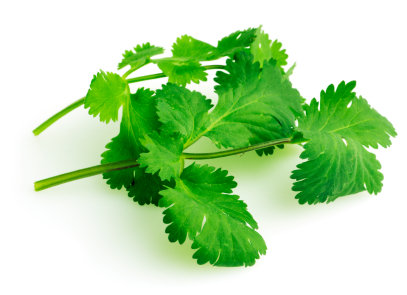 12 Health Benefits of Cilantro on Skin (Top #1 Beauty Tricks)