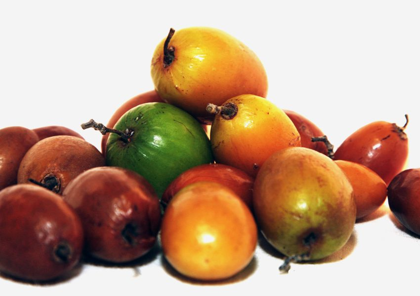 19 Health Benefits of Jujube Fruit #1 Top Chinese Herbal