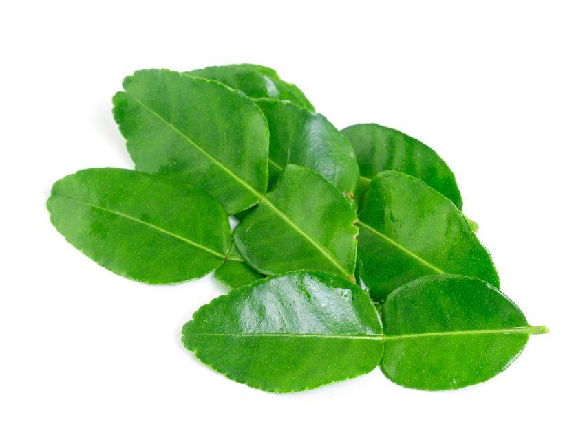 13 Health Benefits of Kaffir Lime Leaves (No.2 is Impressive!)