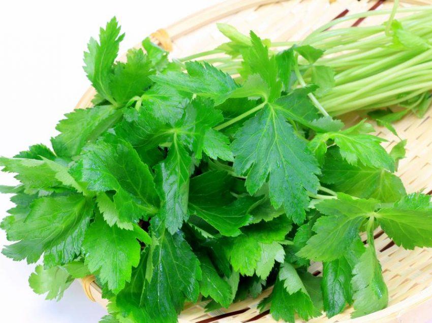 14 Health Benefits of Mitsuba #1 Herbal from Japan