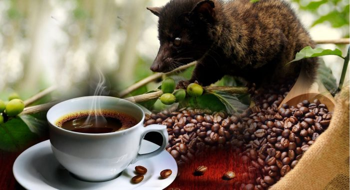 17 Best Health Benefits of Civet Coffee (No.1 is Impressing!)