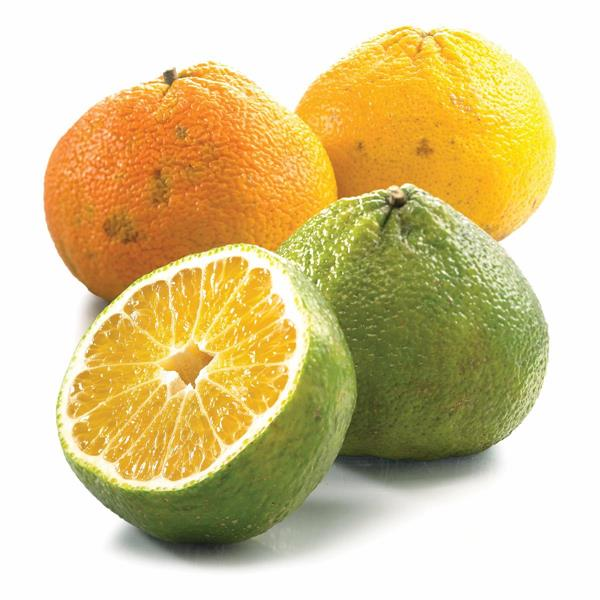 20 Best Health Benefits of Ugli Fruit (No.1 is Excellent)