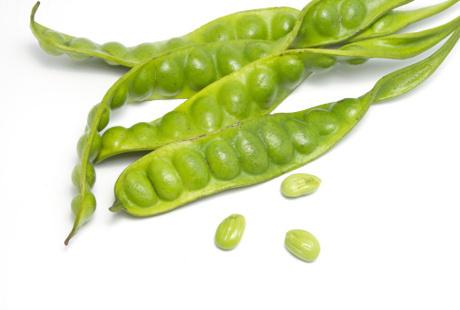 30 Scientific Health Benefits of Petai Beans #Surprising