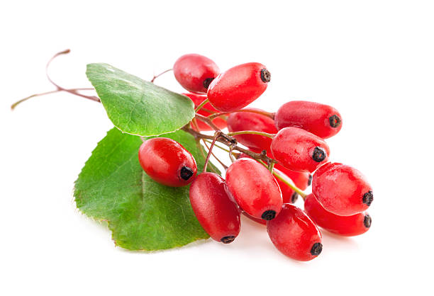 25 Benefits of Barberry for Human Health (No.1 Is Super Shocking)