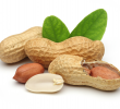 18 Benefits of Peanuts during Pregnancy (Excellent Source of Folate)