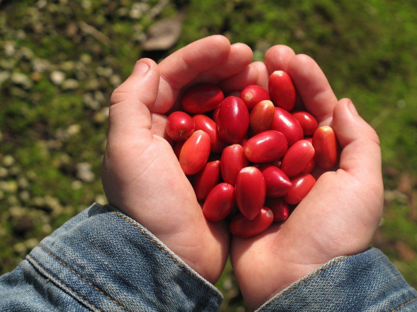 14 Scientific Health Benefits of Miracle Fruit