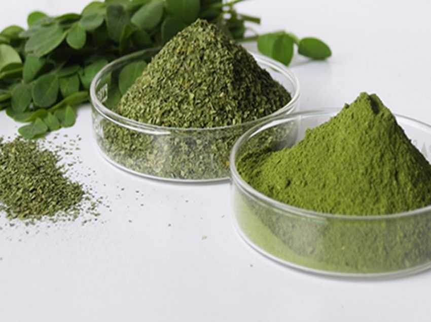 15 Health Benefits of Dried Moringa Leaves (The Miracle Tree)