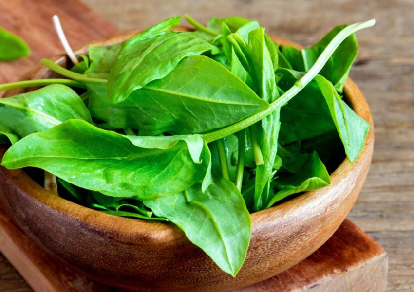 22 Health Benefits of Sorrel Leaves (Best Natural Treatments)