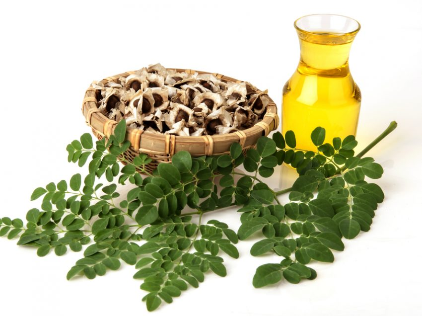 24 Health Benefits of Moringa Seed Oil (No.1 is Super)