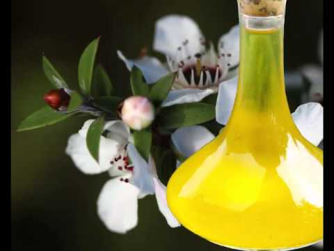 9 Health Benefits of Manuka Oil (New Zealand's Essence Oil)