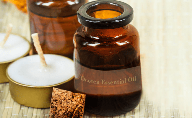 15 Powerful Health Benefits of Ocotea Essential Oil