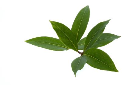 7 Health Benefits of Indonesian Bay Leaves You Need To Know