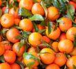 17 Health Benefits of Mandarin Orange (No.2 is Proven)