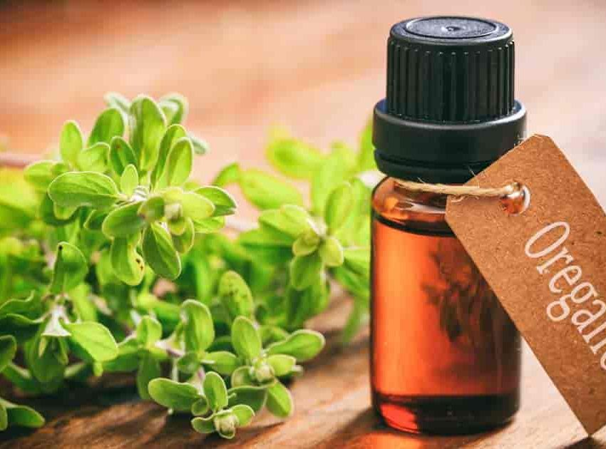 15 Oregano Oil Health Benefits and Side Effects