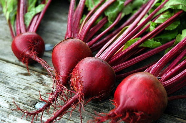 10 Unexpected Health Benefits of Beets for Dogs