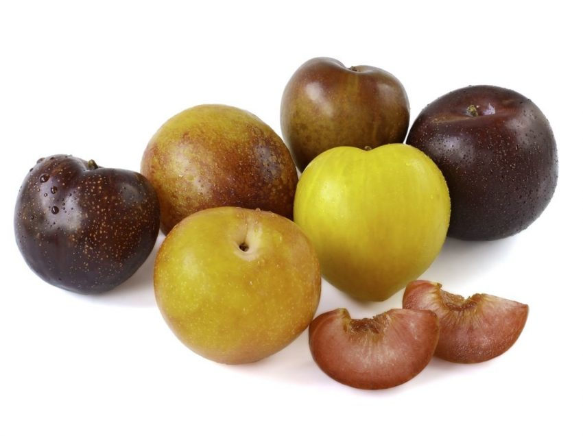 Is Pluot Good for You? Here is 10 Facts That Will Shock You!