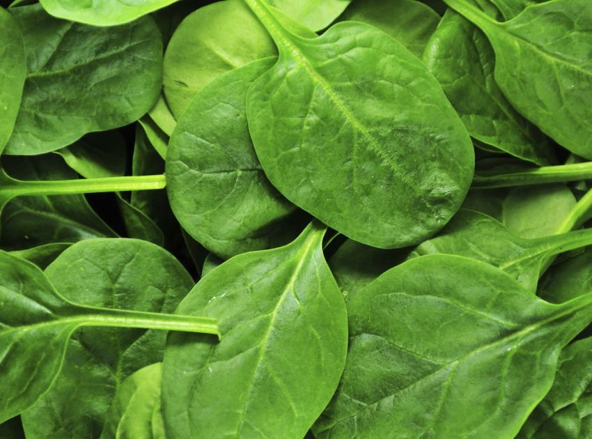 10 Secret Benefits of Spinach for Skin and Hair Health