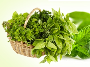 15 Super Potent List of Herbal Plants Found in the Philippines