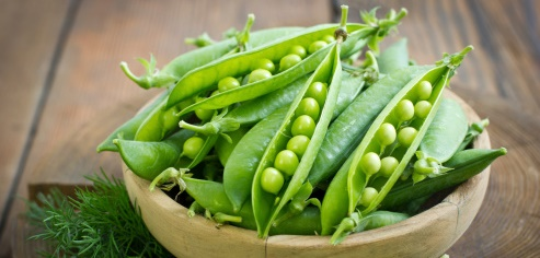 10 Benefits of Pea Protein for Weight Loss Treatments