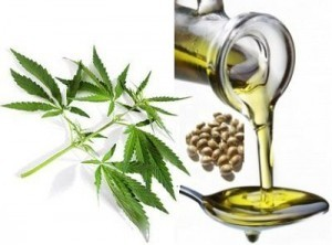 6 Proven Health Benefits of Hemp Oil for Weight Loss