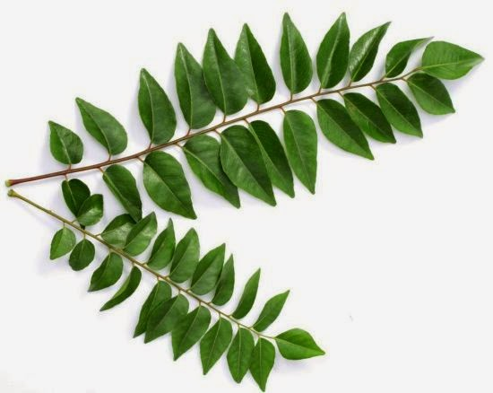All Benefits of Curry Leaves for Dandruff and How to Use