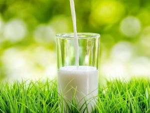 health benefits of milk in Ayurveda