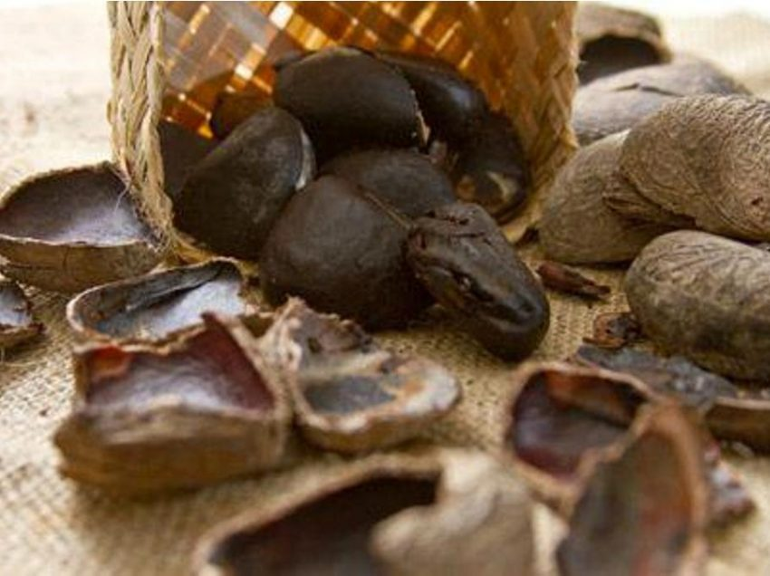 10 Health Benefits of Keluak Fruit for Your Healthy Life