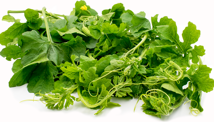 Top 10 Health Benefits of Karela Leaves – Super Potent