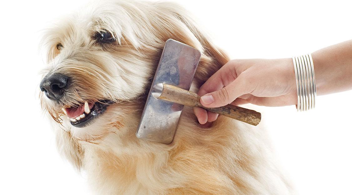 brushing dog's hair