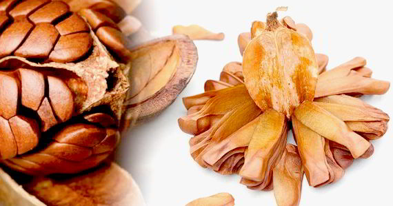 15 Health Benefits of Sky Fruits – The Mahogany Seeds