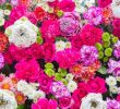 12 Benefits of Flowers for Health and Happiness