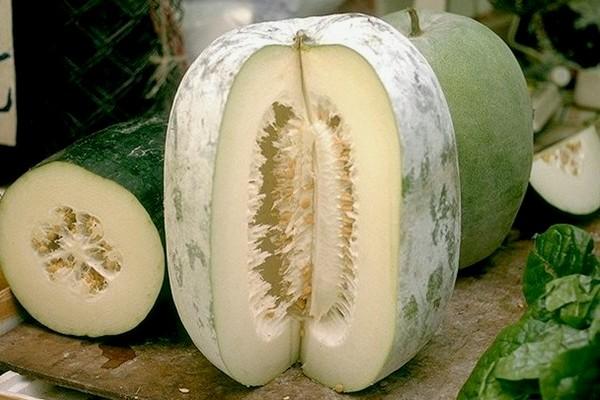 15 Health Benefits of White Gourd – Winter Melon