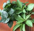 10 Excellent Health Benefits of Saluyot Leaves