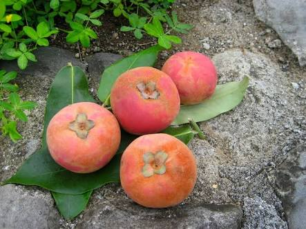10 Famous Health Benefits of Mabolo Fruit in Asian Countries