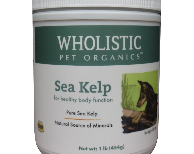 10 Amazing Health Benefits of Kelp for Dogs