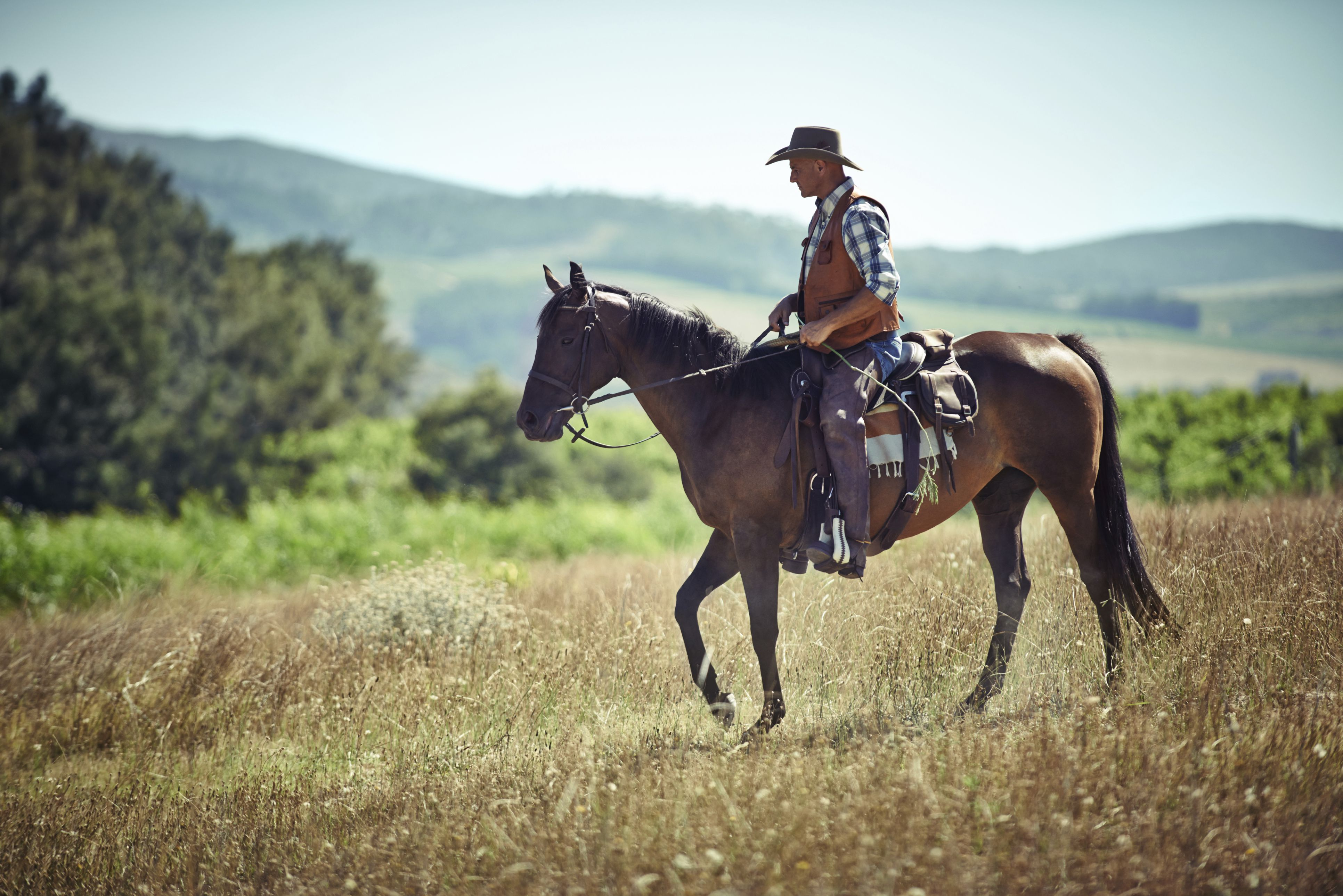 9 Best Health Benefits Of Riding A Horse Dr Heben