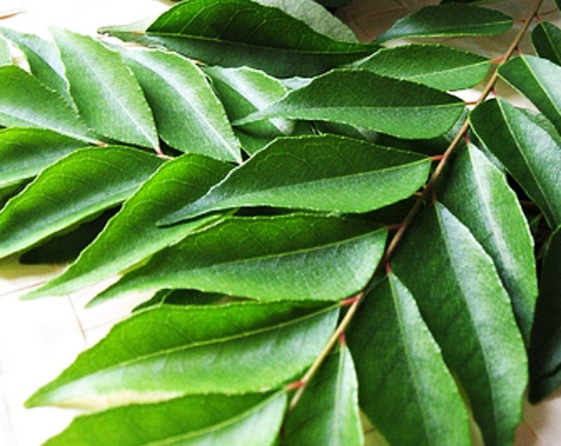 Benefits of Curry Leaves for Pregnancy – Every Mom Should Know!