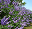 10 Health Benefits of Vitex Berry For Woman Hormones